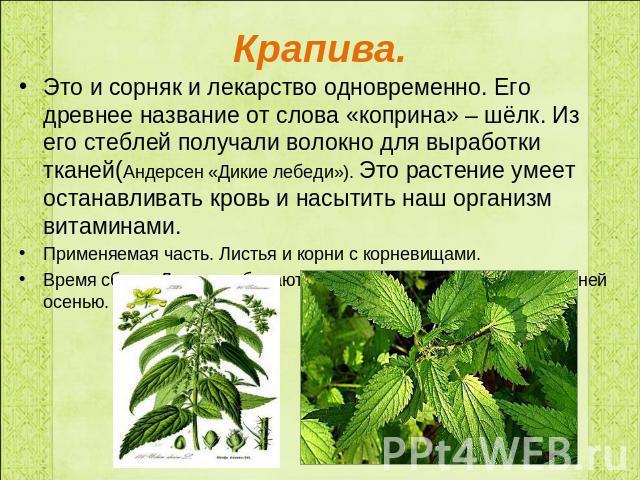 Доклад про целебное растение 2113