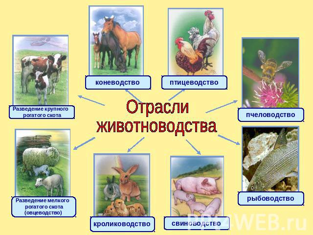 Животноводство сахалинской области реферат 9479
