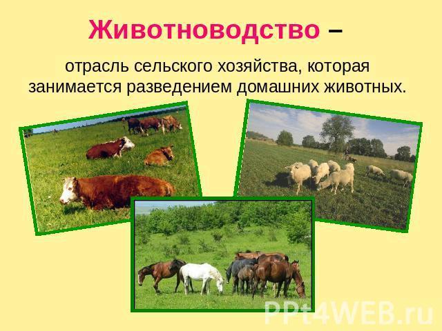 Доклад на тему животноводство 8028